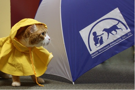 Ravenna_Animal_Hospital_raincat